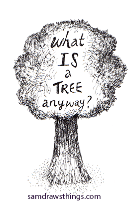 what is a tree anyway